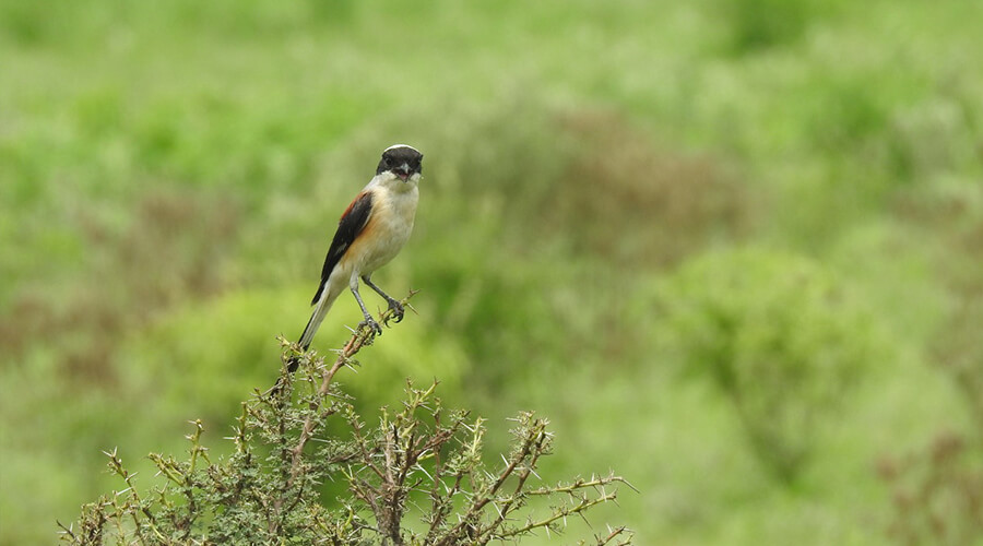 bird_watching_tour_northern_india