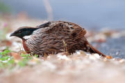 all_india_birding_tours