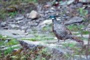 india_bird_watching_tours