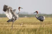 india_birding_tours
