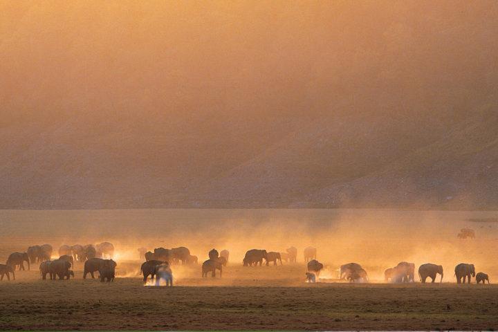 jim_corbett_jeep_safari