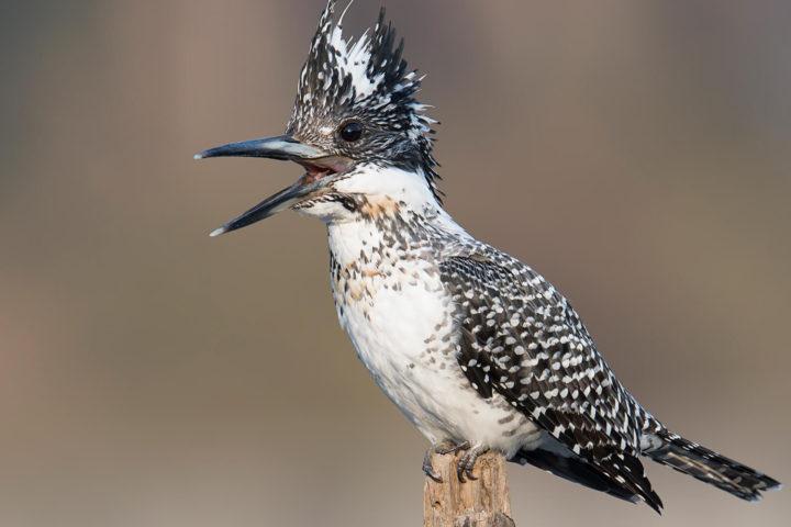 sattal_birding_tours