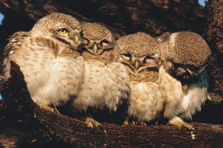 owl_tours