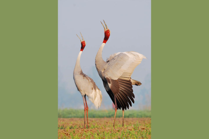 bird_watching_in_india