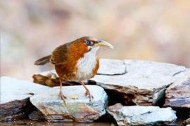 uttarakhand_birding