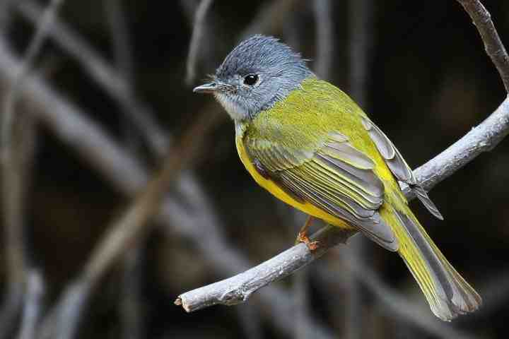 birding_trips_to_india