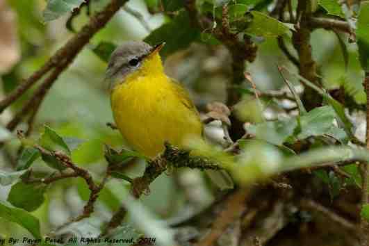 india_birding_1