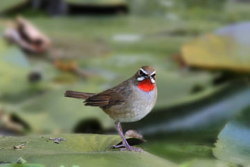sattal_birding_tour_packages