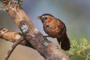 birds_of_india