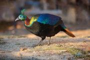 chopta_birding_trip_report