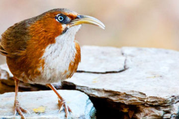 northern_india_birding_tours