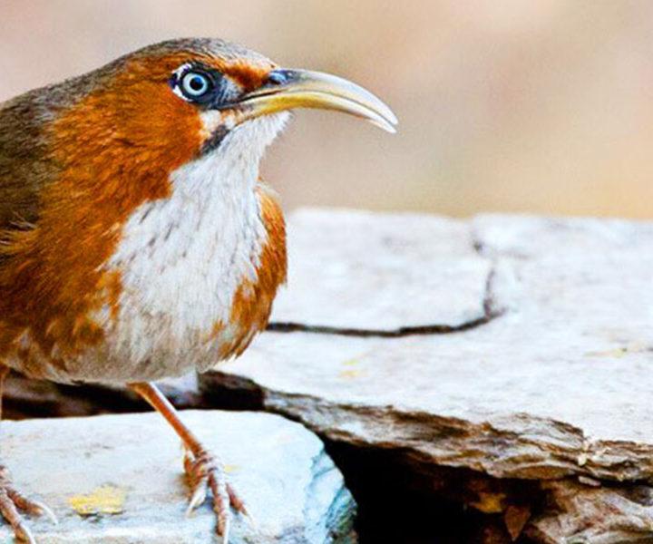 northern_india_birding_tours