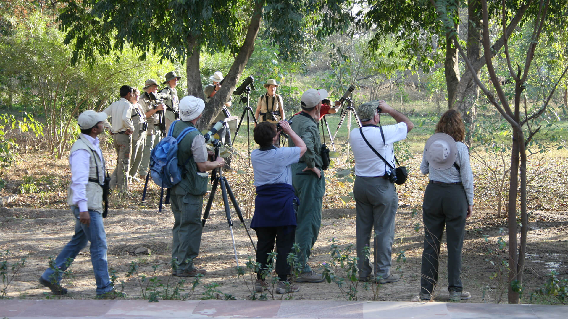 Serious Bird Watching in North India (15 Days; # 148; shikra)