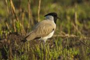 birding_tours_to_india