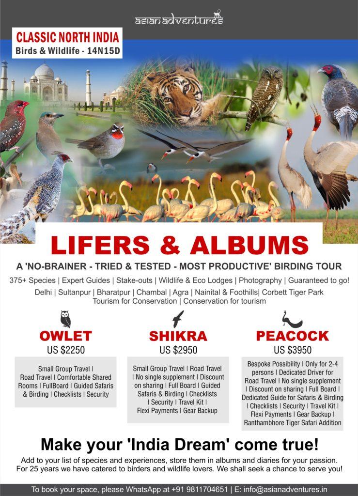 north_india_birding_tours
